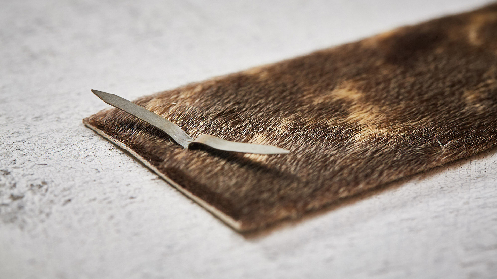The furry backside of the sealskin cheque